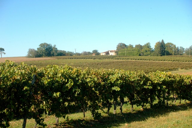 Vignoble d'Hourtica